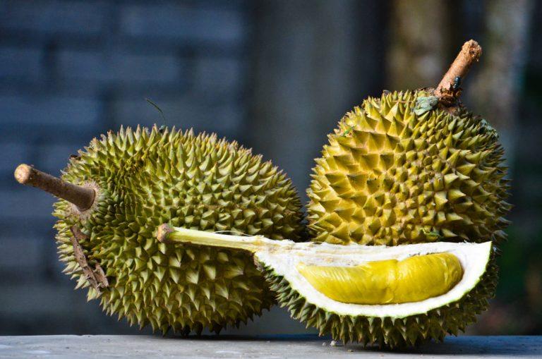 Durian Musang King, Varian Terbaik yang Ada di Dunia