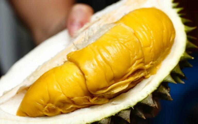 Fakta Durian Musang King Import Paling Laris di Pasaran