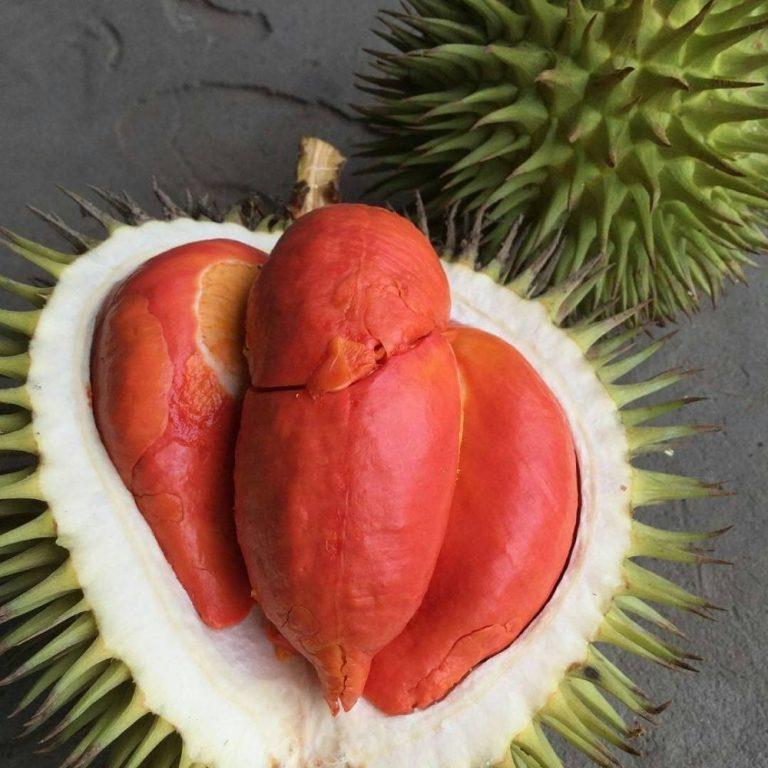Jenis Durian Terbaik yang Berbuah Paling Cepat